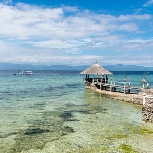 Отдых на острове Себу, Филлипины, дайвинг с китовыми акулами