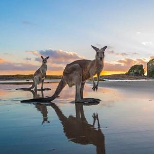 Отдых на курортах Австралии, описание, характеристика